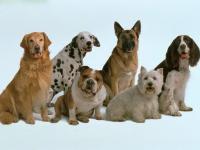 6107896_dogs_34.jpg