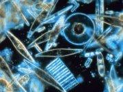 9567-plankton.jpg