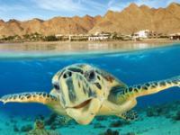 Egypt_Vacation-Spotlight.jpg