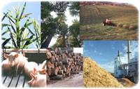 biomassm.jpg