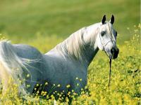 bogowie-konie024.jpg