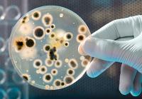 dirty-money-bacteria-431x300.jpg