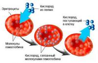 gemoglobin.jpg