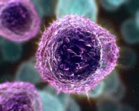 immunpam.jpg