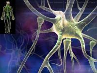neurone-771072.jpg