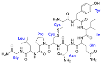 oxytocin.png